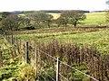 Fields near South Healey Farm - geograph.org.uk - 622094.jpg