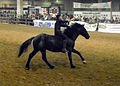 Fieracavalli 2014 - Cavallo Romano4.jpg