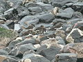 Find the birdie - geograph.org.uk - 655439.jpg