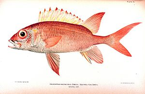 For Your Eyes Only (short story collection) - A squirrel-fish; the Hildebrand Rarity was a rare member of the species.