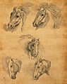 Five heads of horses. Drawing, c. 1789. Wellcome V0009142ER.jpg