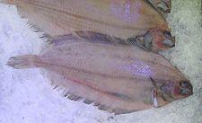Плоская рыба 2011.jpg