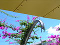 Flickr - brewbooks - Bougainvillea Grand Arch - South Bank Parklands, Brisbane.jpg
