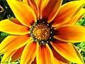 Flor (2700242588).jpg