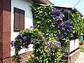 Floral pergola. - Füleki street, Öreghegy, Székesfehérvár, Fejér county, Hungary.JPG