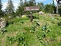 Flore des hautes chaumes-Jardin d'altitude du Haut-Chitelet.JPG