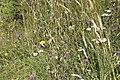 Flore sauvage-4340.jpg