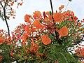 Flors a Cruzpampa.jpg