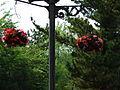 Flower-center133931.jpg