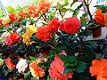 Flower-center141512.jpg