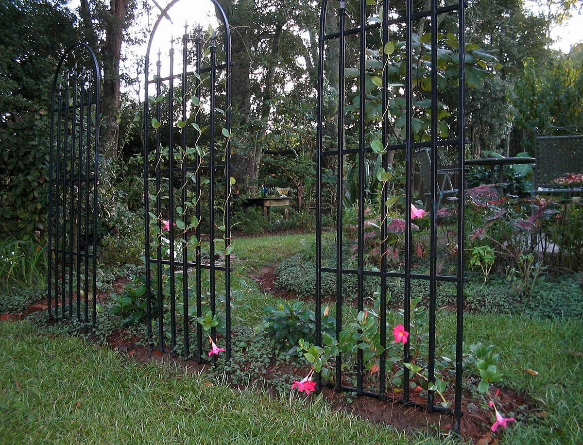 Ideas For Trellis In Garden Part - 37: Wikipedia