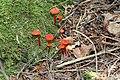 Flowerpot Island, Ontario - Laslovarga (26).jpg