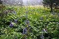 Flowers I (2844921384).jpg