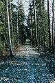 Follow The Path (205601113).jpeg