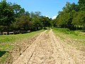 Footpath, Wadhurst Park - geograph.org.uk - 512925.jpg