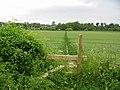 Footpath Chalbury Dorset - geograph.org.uk - 187276.jpg