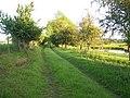Footpath To Manor Farm - geograph.org.uk - 459490.jpg