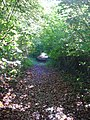Footpath on Rushmore Estate - geograph.org.uk - 266176.jpg