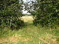 Footpath to Snelsins Lane, Cleckheaton - geograph.org.uk - 526614.jpg