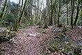 Forêt @ Alex (51098357470).jpg