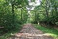 Forêt domaniale de Bois-d'Arcy 15.jpg
