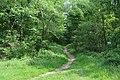 Forêt domaniale de Bois-d'Arcy 41.jpg