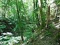Forest @ Saint-Jorioz (50470911446).jpg