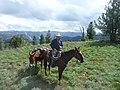 Forest Service Horse Packer, Wallowa-Whitman National Forest (26776502366).jpg