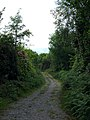 Forestry path from Derrynagran to Lough Cullen - geograph.org.uk - 486774.jpg