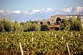 Francois Lurton, la cantina vinicola and vineyard in Argentina.jpg