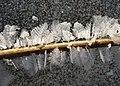 Frozen pond Papez in Dobris (7).jpg