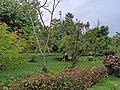 Garden near the Alley walkway at Kadri Park in Mangalore.jpg