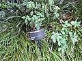 Gardenology.org-IMG 0058 rbgm10dec.jpg