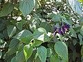 Gardenology.org-IMG 0407 rbgs10dec.jpg