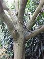 Gardenology.org-IMG 2584 rbgs11jan.jpg