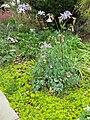 Gardenology.org-IMG 5195 hunt0904.jpg