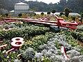 Gardenology.org-IMG 7358 qsbg11mar.jpg