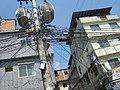 Gato - panoramio (3).jpg