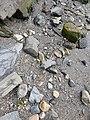 Geiranger-Fjord 31082017 26.jpg
