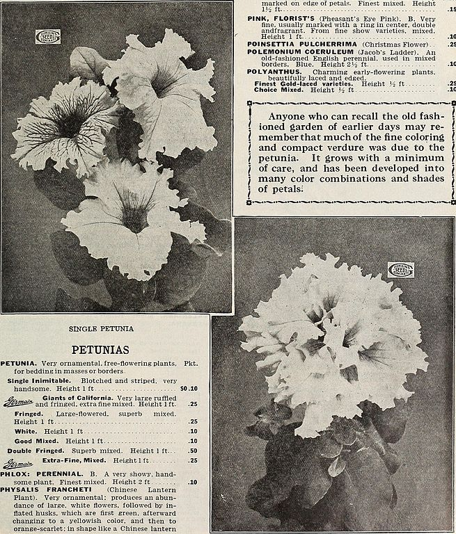 File:Germain - (catalog) (1912) (14761593556) jpg - Wikimedia Commons