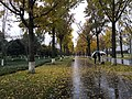 Gingko Avenue, University of Electronic Science and Technology of China.jpg