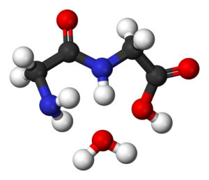Peptide bond - Glycine condensation