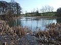 Goosehill Pond - geograph.org.uk - 365707.jpg