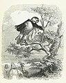 Grandville - Fables de La Fontaine - 10-12 . Les Deux Perroquets, le Roi et son fils.jpg