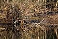 Great blue heron (46427915512).jpg