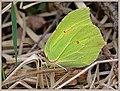 Green meets green (40501329105).jpg