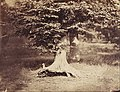 Gustave Le Gray (French - The Beech Tree - Google Art Project.jpg