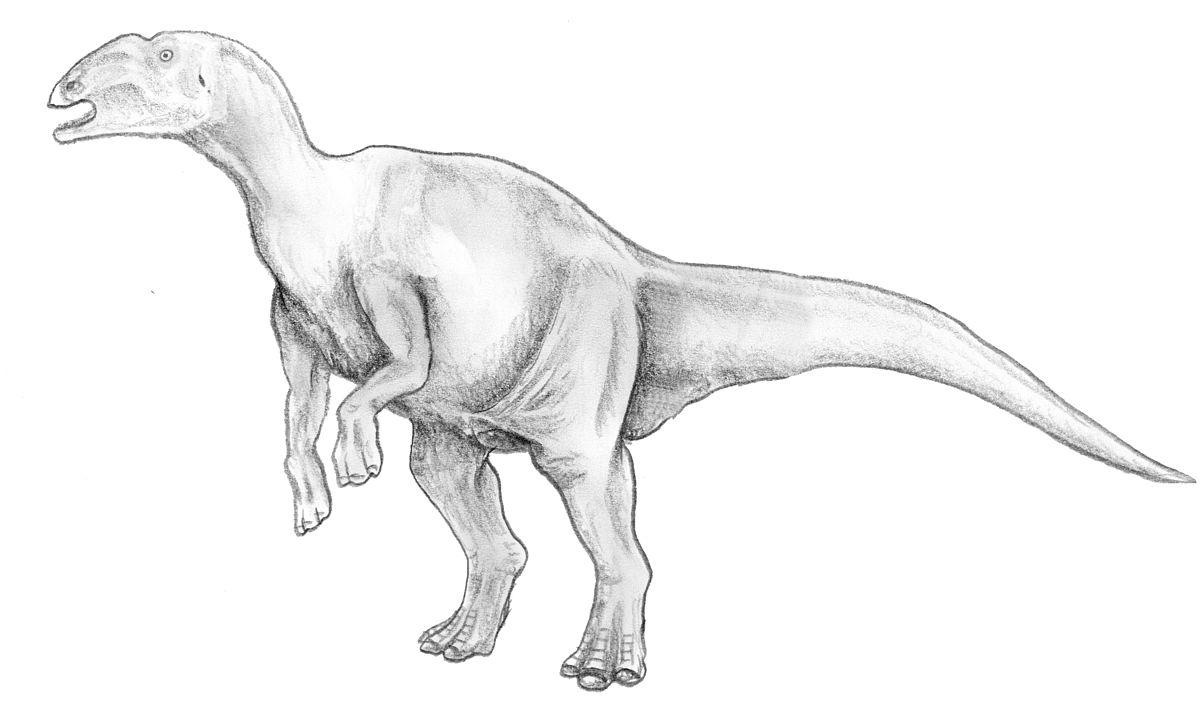 hadrosaur wiktionary