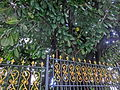 HK 北角半山 North Point Mid-Levels 雲景道 77 Cloud View Road 雲峰 Summit Court Apr-2014 tree.JPG