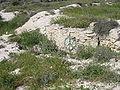 HaArbaa IMG 0553.JPG